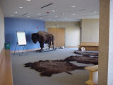 Buffalo room at Neal Smith National Wildlife Refuge