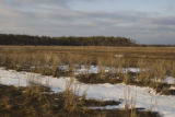 Snow on coastal wetland