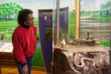 Visitor looking at a shorebird exhibit