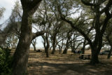 Visitors having lunch in a grove of oak savannah