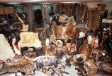 Confiscated wildlife products