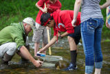 Macroinvertebrate collection