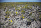 Wildflowers at Monomoy NWR