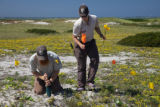 Placing markers at Monomoy NWR