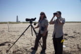 Service biologists study shorebirds