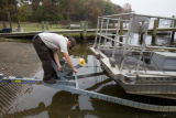 Electrofishing for Northern Snakehead