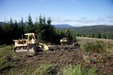 Bulldozer loosens the ground for Red spruce restoration