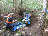 Biologists tagging Delmarva Peninsula fox squirrels