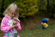 Child examines a walnut