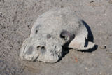 Dead Manatee on shore