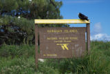 Laysan Island sign with Magnificent Frigatebird