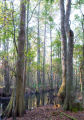 Coastal bottomland forest
