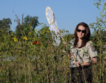USFWS employee catches a Monarch butterfly