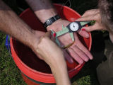 Aquatic biologist measuring adult Cherokee darter, a threatened species (Etheostoma scotti).