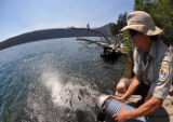 Stocking Lahontan cuttroat trout in Fallen Leaf Lake