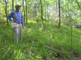 Preeminent botantist Angus Gholson views fringed campion habitat along the Appalachicola River, at...