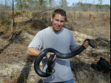 Pete Pattavina, USFWS Fish and Wildlife Biologist holds a threatened Eastern indigo snake...