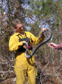 Jim Ozier, GA Dept. of Natural Resources with Eastern indigo snake