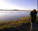 Birdwatching at Bosque del Apache National Wildlife Refuge