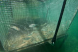 Fish host cage underwater at Genoa NFH