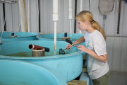 Youth Conservation Corps volunteer cleans sturgeon tank