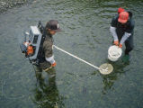 Sampling a Creek on Adak