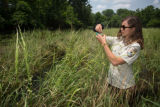 USFWS biologist collects Texas Wild Rice