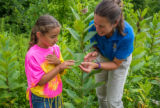 FWS employee shows a young girl a Monarch caterpillar