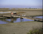 Don Edwards San Franciso Bay National Wildlife Refuge, California
