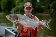 Fishery biologist with Silver carp
