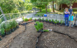Monarch Waystation Garden