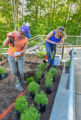 Volunteers planting a monarch garden