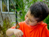 Little boy looking at tagged monarch
