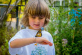 Child observes tagged monarch on hand