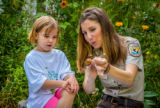 FWS employee shows child where to tag a monarch