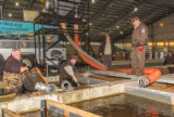FWS employees prepare fish pump to load fish onto hatchery