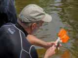 Instructor examines native mussel