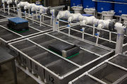 Fish hatchery tanks and automatic feeder