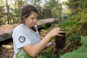 Americorps volunteer plants tree
