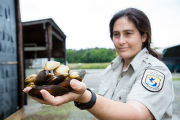 Biologist holds freshwater mussels
