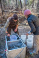 Biologists dip net Gila trout out of tank into buckets