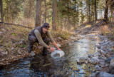 Biologist stocks Gila trout into Mineral Creek