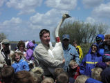 Man holds trumpeter swan during demonstration