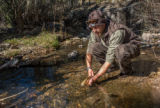 Biologist stocks Gila trout in Mineral Creek