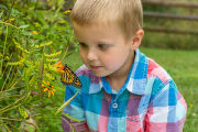 Little boy with monarch butterfly