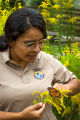 FWS biologist holding monarch butterfly on goldenrod flower