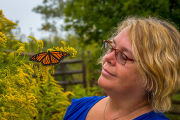 Woman looking at monarch butterfly on goldenrod flower