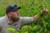 NCTC land management specialist with wild blackberry bushes with berries