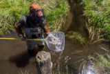 Employee nets fish in canal