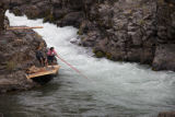 Dip netting a salmon in the Klickitat River